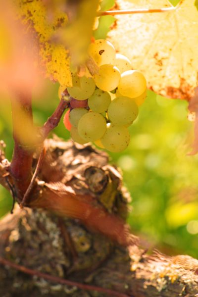 Discover our vineyards!