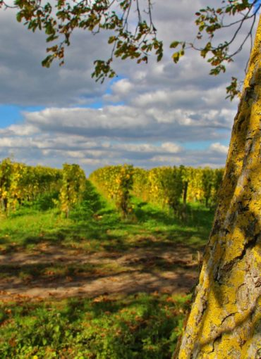 wines-val de loire- vouvray-montlouis-touraine