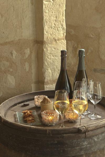 Visits to cellars and vineyards